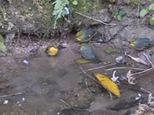 非法贩运鸟类被查 500多只鸟放归自然
