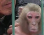 河南猴戏艺人二审宣判 改判无罪