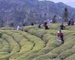 夷陵区:中国三峡第五届茶文化艺术节开幕