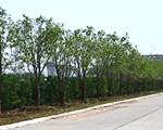 宜昌高新区生物产业园:绿满园区
