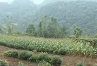 长乐坪镇苏家河:打造乡村旅游 铺就绿色生态脱贫路