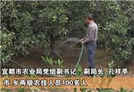 宜都:农技人员上门指导 抗灾救灾