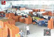 点军三岔口村:新兴产业开辟致富新途径