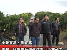 """宜都洋溪蜜柚销售搭乘""""电商快车"""""""