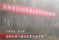 当阳市举行森林抚育技能竞赛