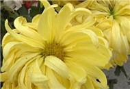 宜昌气候适宜养殖花卉 掌握习性很重要