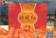 晓曦红宜昌蜜橘签订1.8万吨销售合同