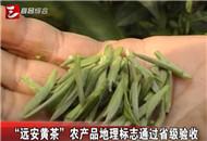 """""""远安黄茶""""农产品地理标志通过省级验收"""