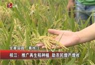 枝江:推广再生稻种植  助农民增产增收