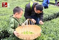 传播茶文化 宜昌茶品牌叫响全国