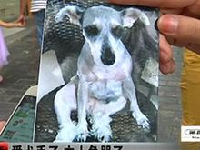 爱犬丢了主人急哭了 被谁抱走了?