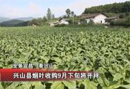 兴山县烟叶收购9月下旬将开秤