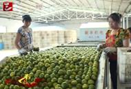 枝江市早熟柑橘获丰收 开始采摘上市