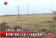 董市镇打造枝江市首个千亩蔬菜基地
