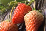 蘑菇住进草莓家